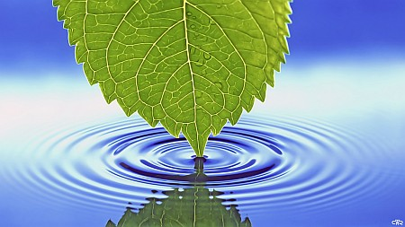 Right now spring is building energy underground, waiting, getting ready.! Click to visit Leaf on PictoRescue.de