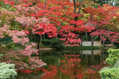 Fall Foliage destinations, part 1: Texas! :: Examiner.com